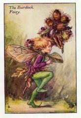 The Burdock Fairy.