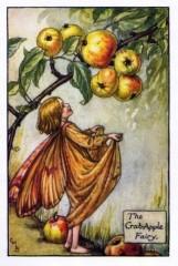 The Crab-Apple Fairy.