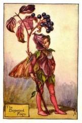 The Dogwood Fairy.
