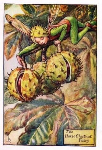 The Horse Chestnut Fairy.