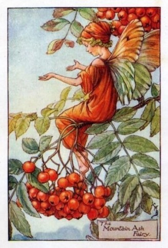The Mountain Ash Fairy