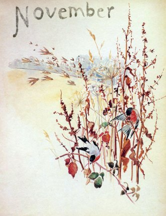 Bullfinches feeding on weed seeds, November 1905. Edith Holden.