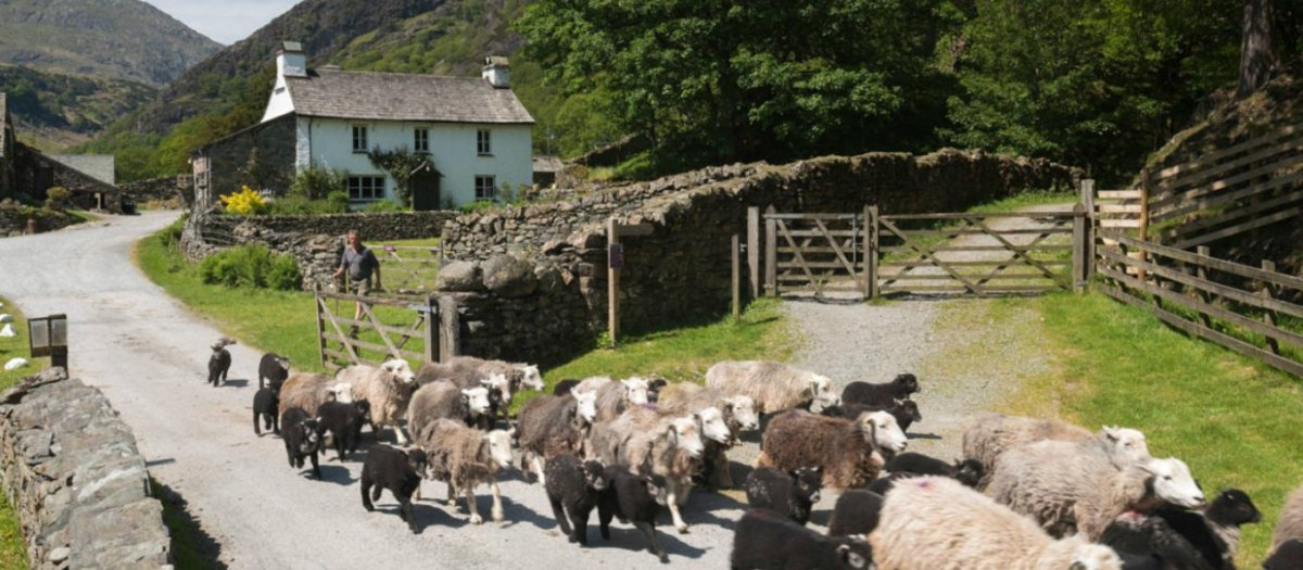 ♔Herdwick Sheep-The Lake District's Gardeners