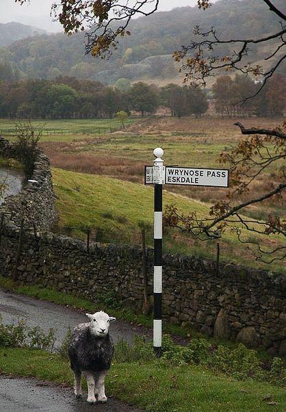 eskdale #sheep #lake district #signpost