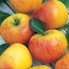 Cox's Orange Pippin,