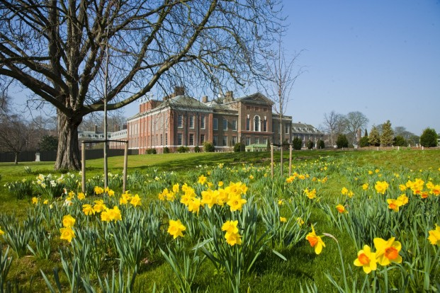 Kensington Palace Springtime daffodils bloom in the east front gardens. Photo credit Historic Royal Palaces.