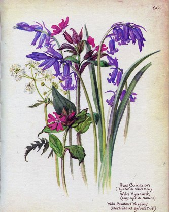 Red campion and Wild Hyacinth, May 1906 | Edith Holden