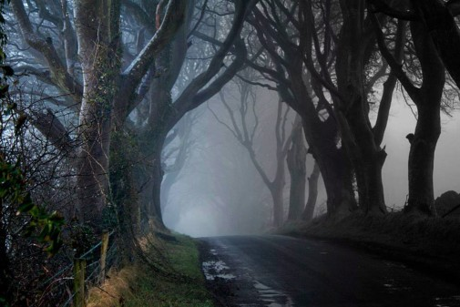 The Dark Hedges by Shauna McFall