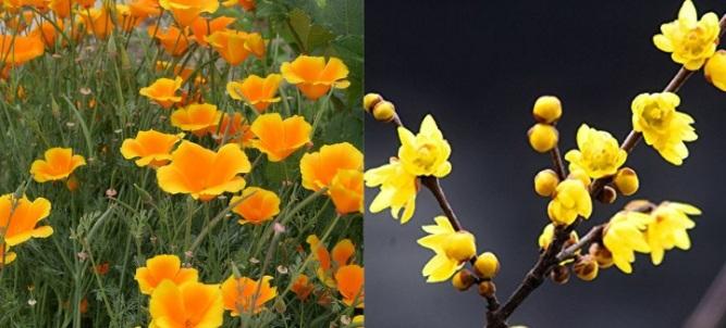 meghan flowers