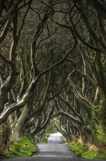 The Dark Hedges. Image: Chris Kench.